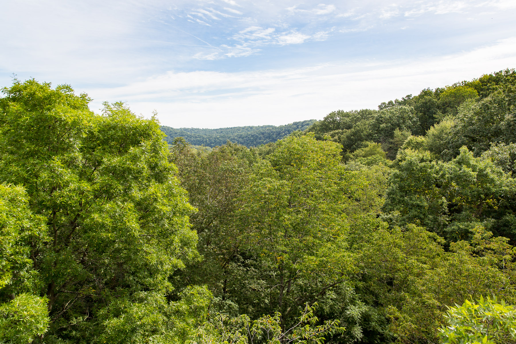 Tree Frog Canopy Tours is conveniently located a few minutes south of Loudonville Ohio - the heart of Mohican Country. & Directions - Tree Frog Canopy Tours