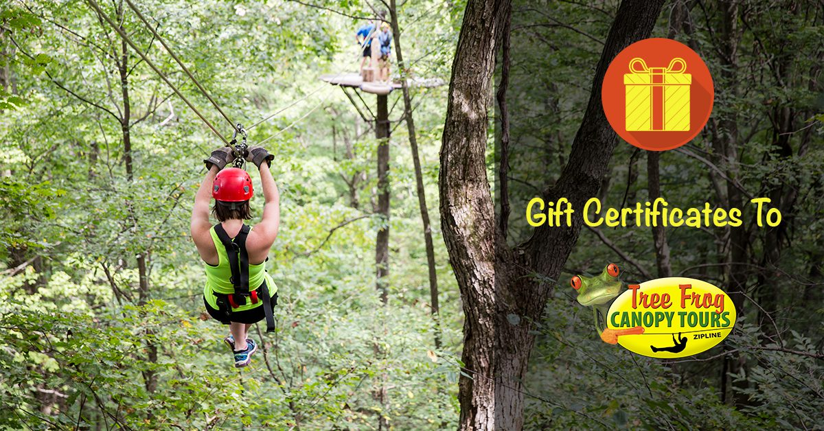 Say Merry Christmas with a Tree Frog Gift Card!